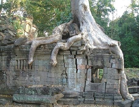 Nature doing its thing, Preah Khan